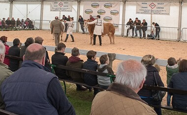 Countryside Live at Great Yorkshire Showground