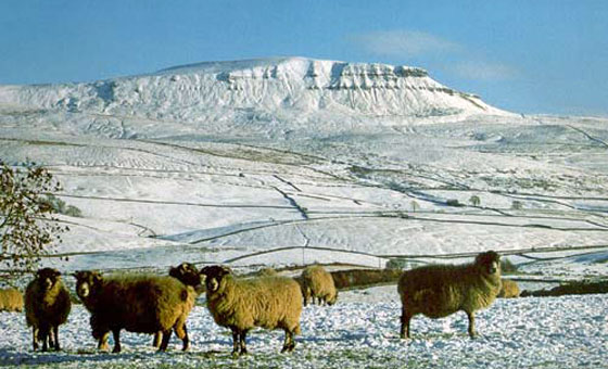 Pen-y-ghent in the Snow